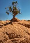Lone treeXxxxweb